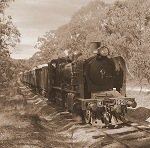 The Train in the Forest